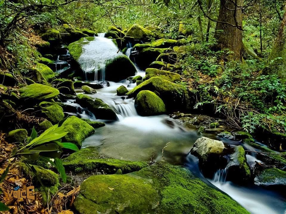 بالصور مناظر طبيعية متحركة , اجمل المناظر التي تعجبك 580 14