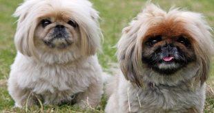 صورة انواع الكلاب , انواع الكلاب المختلفة
