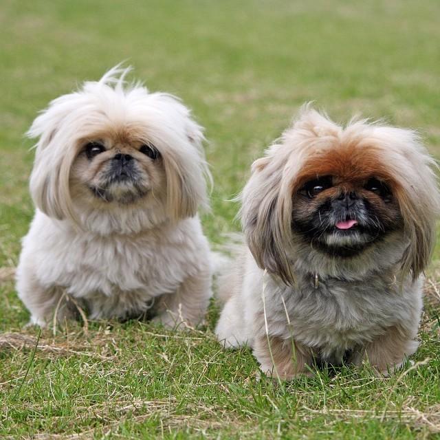 صوره انواع الكلاب , انواع الكلاب المختلفة