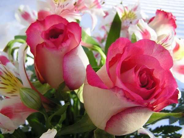 بالصور صور ورد قلوب , رمزيات قلوب رومانسية 11680 9