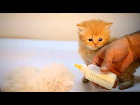 صور صور قطط صغيرة  , قطط صغيرة جميلة