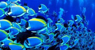 صور هل السمك يشرب الماء , معلومات عن السمك