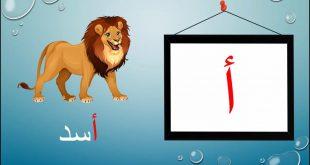 بالصور الحروف العربية بالصور , صور الحروف للاطفال 11862 9 310x165