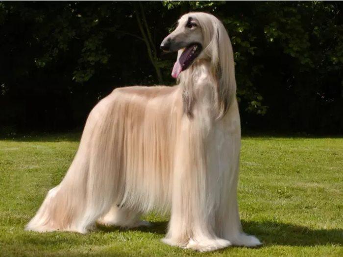 بالصور صور كلاب كبيره , احلي صور حيوانات 11935 6