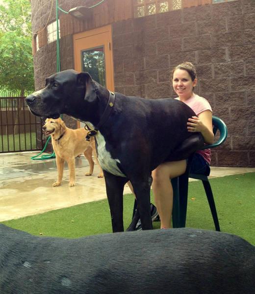 صور صور كلاب كبيره , احلي صور حيوانات