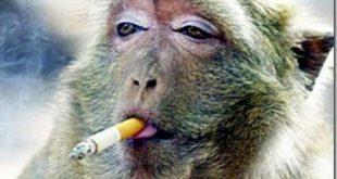 بالصور مقاطع مضحكة للحيوانات , صور كوميدية للحيوانات 11947 12 310x165