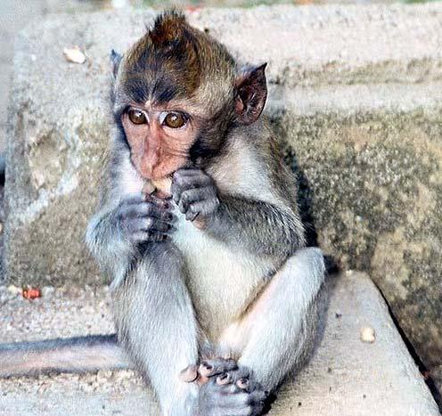 بالصور مقاطع مضحكة للحيوانات , صور كوميدية للحيوانات 11947 5