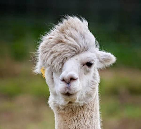 بالصور مقاطع مضحكة للحيوانات , صور كوميدية للحيوانات 11947 7