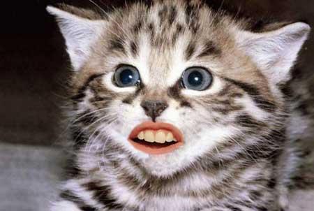 بالصور مقاطع مضحكة للحيوانات , صور كوميدية للحيوانات 11947 8