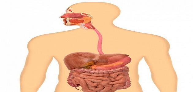 بالصور اين يتم هضم البروتينات , معلومات عن البروتينات 11990