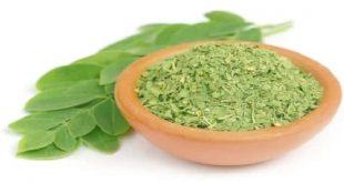 صور فوائد اعشاب المورينجا , اهمية المورينجا للصحة