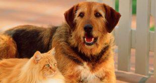 صور اسماء كلاب بالعربي , احلي اسامي للكلاب
