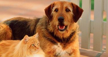 بالصور اسماء كلاب بالعربي , احلي اسامي للكلاب 11638 2