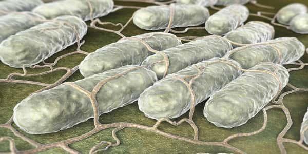 صورة علاج السالمونيلا بالاعشاب , ماهو مرض السالمونيلا