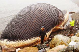 صور اكبر حيوانات في العالم , صور حيوانات غريبة