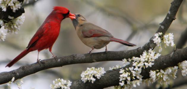 صور صور عصافير الحب , احلي رمزيات عصافير