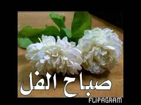 صورة احلى صباح لاحلى ناس , صباح الورد