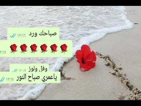 تحميل اغنية حبيبي صباح الخير فيديو