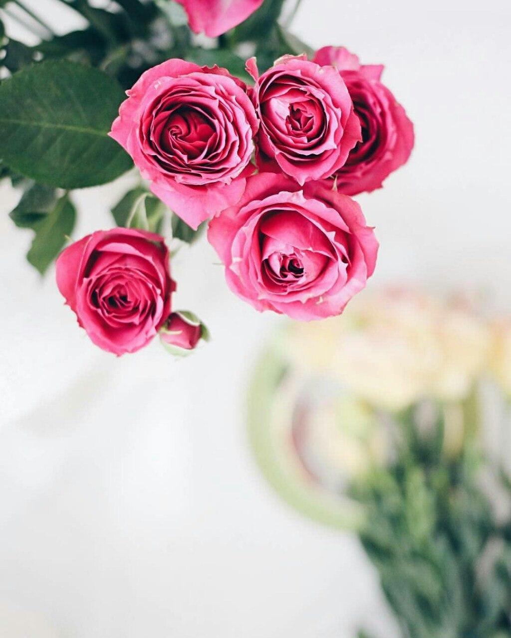 صورة خلفيات ورد , غير خلفيتك لصور الورد