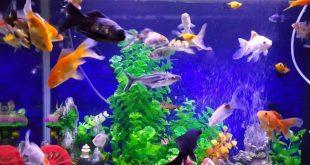 صورة معلومات عن الاسماك , اهم معلومات يجب معرفتها عن السمك