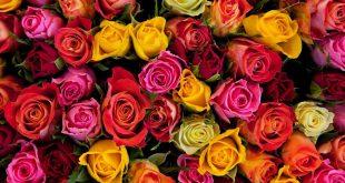 لكل لون معني , زهور و ورود