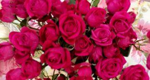 قصائد عن الورود  , صور ورد اشعار
